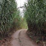 Portuguese Camino Walk