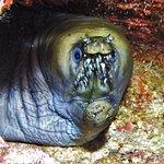 Viper moray - night reef dive