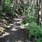 Photo of Kumano Kodo Pilgrimage Routes
