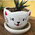 Taa-Peng-Catの写真