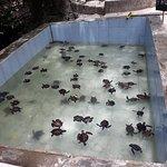 Turtle aquarium Nungwi