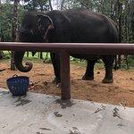 Phuket Elephant Sanctuary Foto