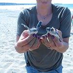 Photo of Lara Bay Turtle Conservation Station