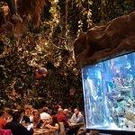 Billede af Rainforest Café