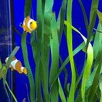 Foto de Blue Planet Aquarium