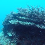 Underwater landscape and corals like these are just fascinating