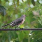 Φωτογραφία: Punta Culebra Nature Center