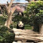ภาพถ่ายของ Macau Giant Panda Pavilion