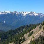 Uitzicht op de Olympic Mountains vanaf Hurrican Ridge