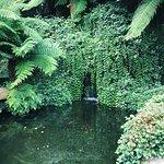 Foto de Trebah Garden