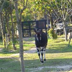 Foto de Yokohama Zoo ''Zoorasia''
