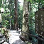 Iya Kazura Bridge resmi