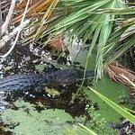 Gator Lake has Gators