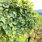 Foto de Mission Hill Family Estate Winery