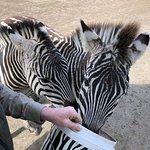 Zoodoo野生动物园照片
