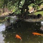 Moir Gardens의 사진