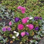 Φωτογραφία: Polar-Alpine Botanical Gardens