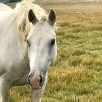Фотография Deerwood Ranch Wild Horse EcoSanctuary