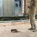 Handler demonstrating how HeroRat is led over example mine area