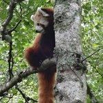 Billede af Highland Wildlife Park