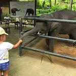 Photo de KokChang Safari Elephant Trekking