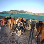 Photo de Ippos Horse Riding and Excursions