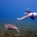 My ultimate dream- swimming with sea turtles