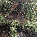 Φωτογραφία: Fairhaven Woodland and Water Garden