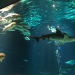 Foto de Sharks Underwater Grill
