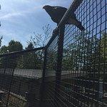 グレーター バンクーバー動物園の写真