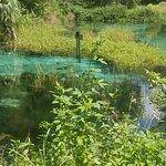 صورة فوتوغرافية لـ Rainbow Springs State Park