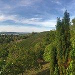 Rappenhof Weinsberg- Aussicht von der Terrasse