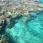 Dolphin Reef Foto