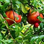 Photo of Jardin Nazari