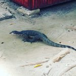 Watch out for the monitor lizards roaming around the underground river