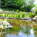 The ornamental pond and garden