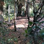Φωτογραφία: North Coast Regional Botanic Garden