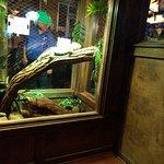 Foto de Winking Lizard Tavern
