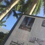Palmeiras e mais palmeiras