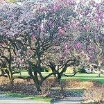 Foto di Parco Hagley