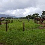 Bild från Princeville Ranch