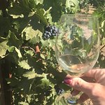 Frog's Leap Winery Foto