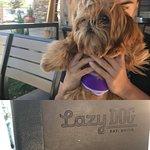 Bilde fra Lazy Dog Restaurant & Bar
