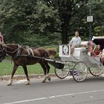 NYC Horse Carriage Rides EST.1979 - Central Park Horse Carriage Rides