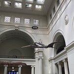 Billede af The Field Museum