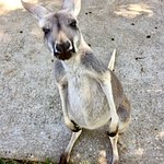 صورة فوتوغرافية لـ ‪Kentucky Down Under Adventure Zoo‬