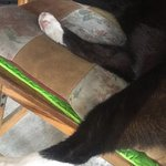 ภาพถ่ายของ เอ็นจอย แบงคอก บิสโทร บาร์
