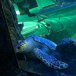 Photo of Sea Life Sydney Aquarium