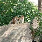 Monkey families near surrounding area