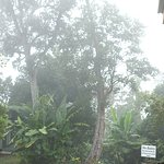 Foto de Mountain Thunder Coffee Plantation